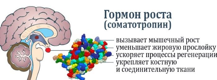 Гормоны как влияют на вес, набор веса у женщин, мужчин, как сбросить лишнее или набрать вес