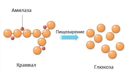 Как расшифровать биохимический анализ крови у взрослых женщин, мужчин, детей