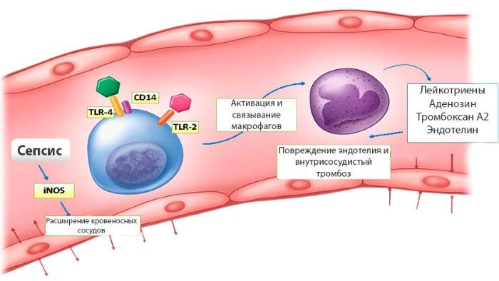 Золотистый стафилококк у грудничка – что это, причины возникновения, признаки и как лечить
