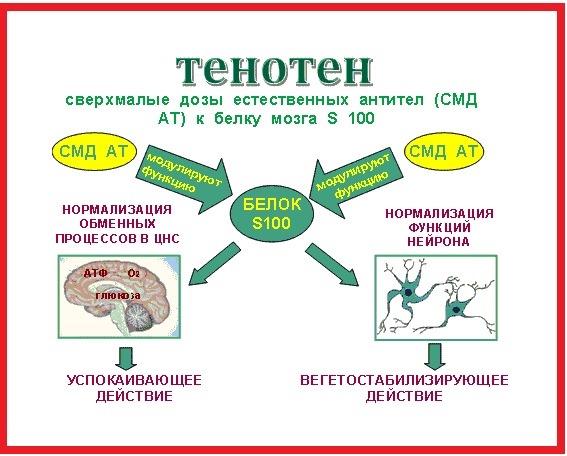 Успокоительные средства для нервной системы взрослого: недорогие и эффективные, без сонливости, для человека за рулем