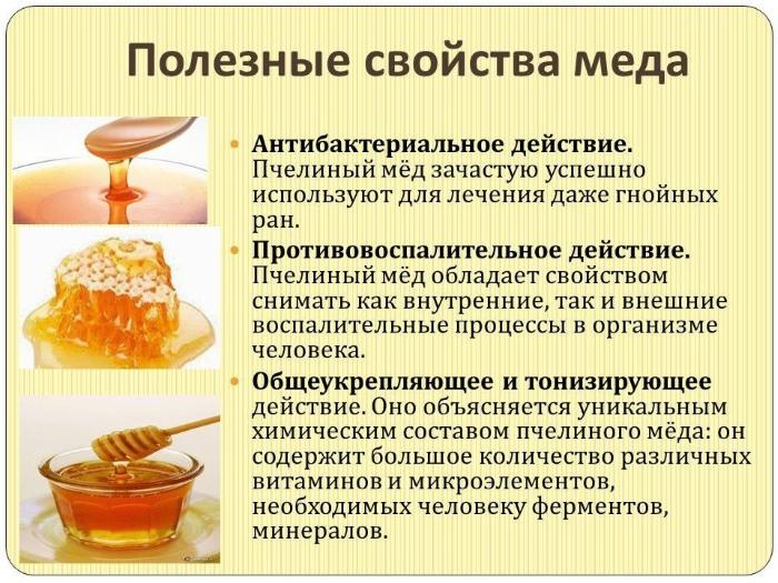 Лечебные свойства алоэ с медом. Как приготовить, принимать, рецепты от кашля, для желудка, глаз, легких, поджелудочной железы, иммунитета
