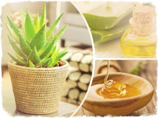Алоэ с медом для иммунитета: рецепт и правила приема