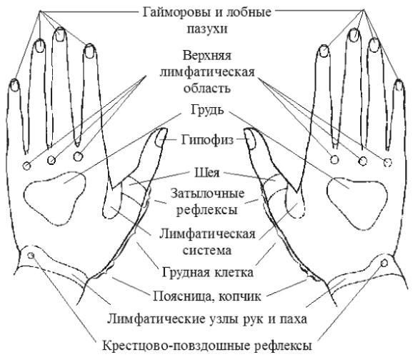 Биологические активные точки на теле человека, отвечающие за органы для улучшения здоровья, похудения, лечения. Фото с описанием