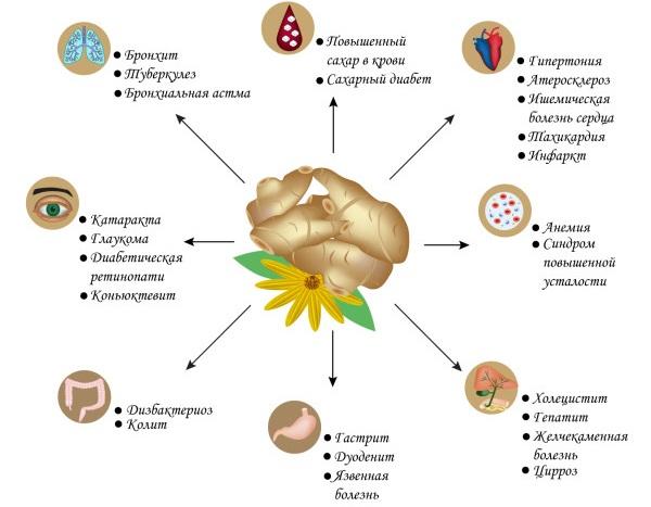 Сироп Топинамбура. Польза и вред, состав и пищевая ценность, гликемический индекс. Рецепт, как приготовить, принимать в домашних условиях