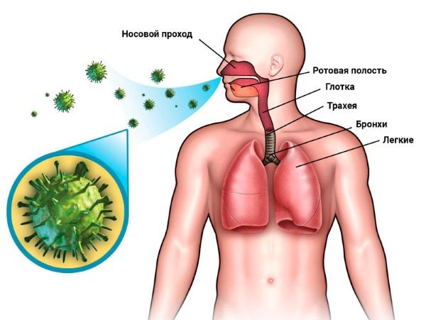 Энтеровирусная инфекция у детей - симптомы и лечение, фото. Как и чем лечить сыпь на коже в домашних условиях, диета, препараты
