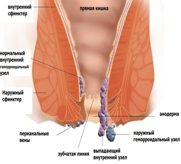 Гепатромбин Г (Hepatrombin H) свечи. Отзывы, инструкция, аналоги, цена