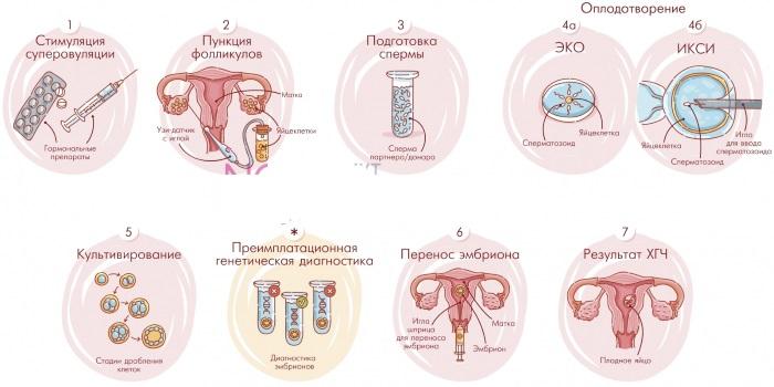 Антимюллеров гормон: норма у женщин по возрасту. Таблица. Что делать, если повышен, понижен уровень АМГ