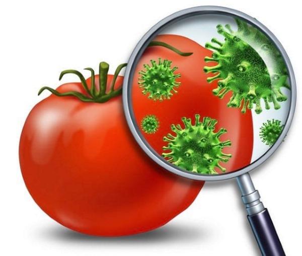 Пищевое отравление у взрослого. Симптомы и лечение в домашних условиях. Первая помощь, лекарства, народные средства, диета