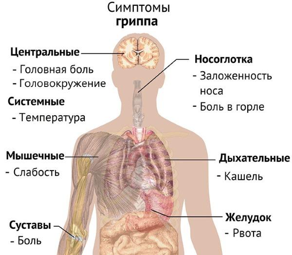 Тошнота и слабость признаки чего у женщин и мужчин. Причины головокружения, вкус железа во рту, температуры, поноса, отрыжки, боли в животе
