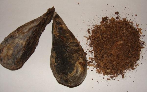 Струя бобра как принимать, лечебные свойства и противопоказания
