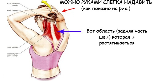 Гимнастика для шеи Шишонина, Бубновского, Норбекова, Дикуля, Куркуриной. Полный комплекс при остеохондрозе, гипертонии, от давления, для позвоночника