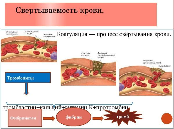 МНО анализ крови. Что это, сколько должна быть норма, расшифровка для женщин, мужчин, при беременности