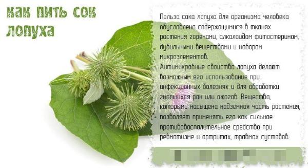 Корень лопуха. Полезные свойства, рецепты для волос, похудения, при онкологии, диабете. Как приготовить и принимать настойку, противопоказания