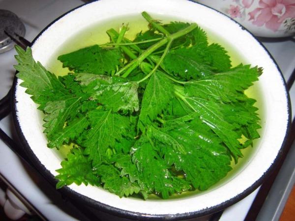 Крапива. Лечебные свойства, польза листьев, семян. Рецепты приготовления отвара, настойки, чай. Применение и противопоказания