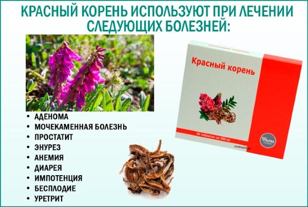Красный корень. Лечебные свойства, инструкция, как принимать таблетки, настойку. Противопоказания и цена