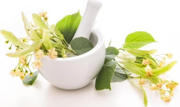 Липа: лечебные свойства и противопоказания