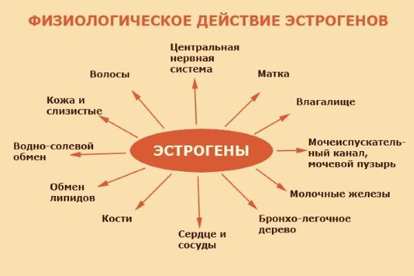 Лютеиновая фаза: что это, какой день менструального цикла, норма прогестерона у женщин, как рассчитать