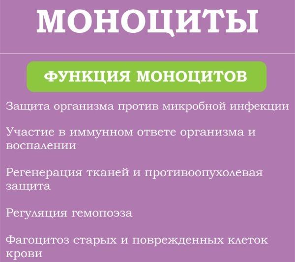 норма моноцитов у ребенка 2 лет