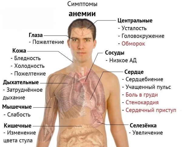 Препараты железа при анемии, для беременных, детей, женщин, мужчин. Польза, как принимать. Список лучших средств, названия и цены