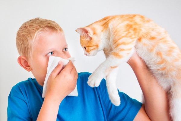 Эритроциты в крови повышены у ребенка: что значит в анализе, симптомы, лечение народными средствами