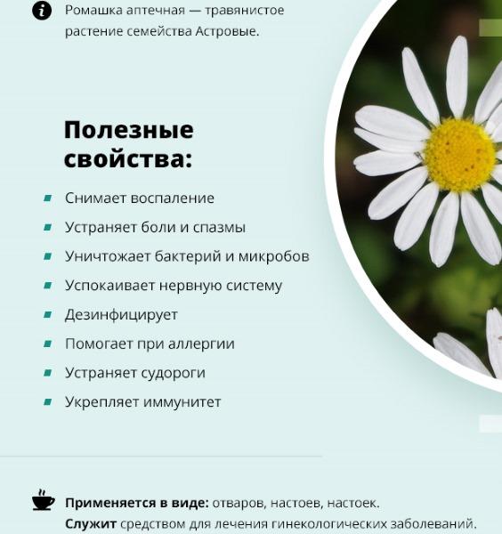 Полезные свойства ромашки аптечной. Как приготовить отвар (настой), лечение