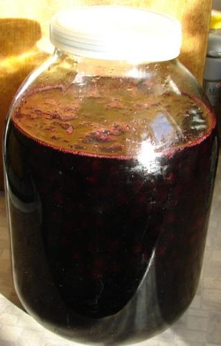 Полезные свойства рябины черноплодной. Рецепты приготовления настойки, компота, заготовка на зиму. Посадка и уход