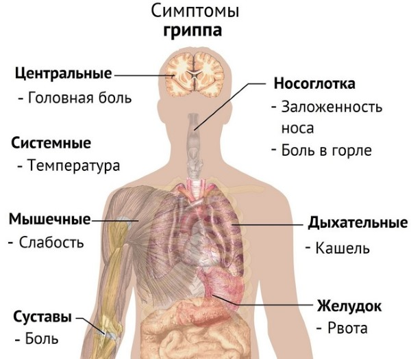 Симптомы, причины и лечение увеличенной селезенки у взрослых и детей. Народные средства, диета
