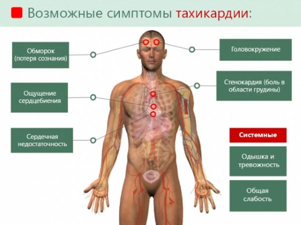 Норма пульса у взрослого человека: женщины, мужчины. Таблица
