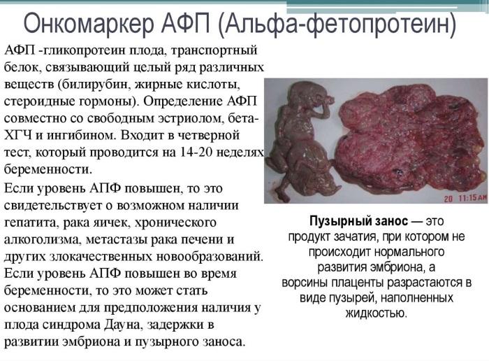 АФП анализ крови у мужчин, женщин при беременности, как сдавать, норма, что показывает