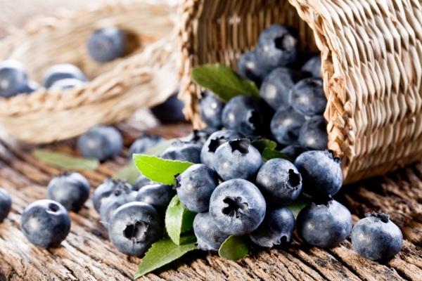 Черника  состав и полезные свойства ягоды вред и противопоказания
