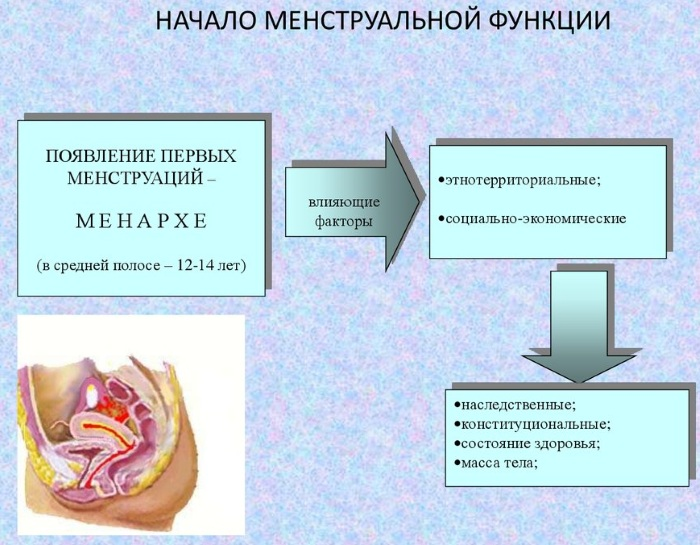 Гистология. Что это такое, как проводится исследование, расшифровка результатов анализа