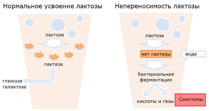 Крапивница у ребенка. Фото, как выглядит, причины, симптомы и лечение. Народные средства, мази, кремы