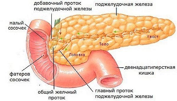 Лечение поджелудочной железы. Таблетки от боли, воспаления, обострения, обезболивающие, ферменты. Список лучших средств