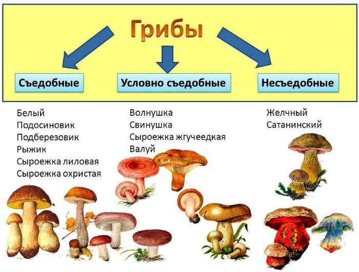Отравление пищей. Симптомы и лечение у детей, взрослых в домашних условиях. Питание