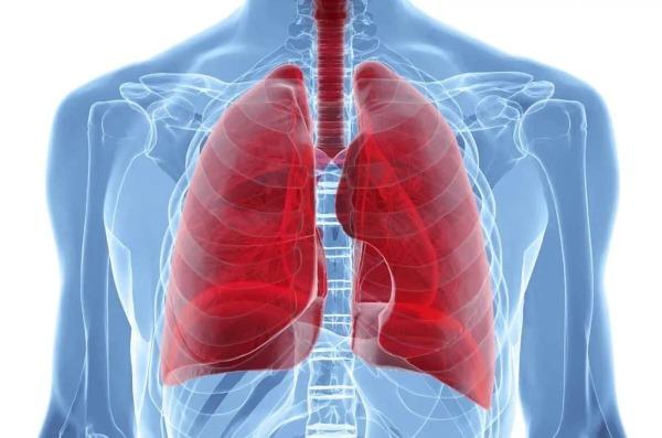 Тело человека. Органы, расположение со спины, в брюшной полости, левого подреберья, функции. Анатомия, схема с описанием мужчины, женщины, детей