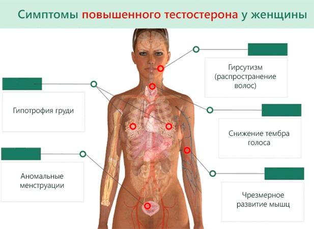 Тестостерон у женщин. Норма гормона, симптомы повышенного, низкого, общий анализ. Лечение, продукты питания, препараты