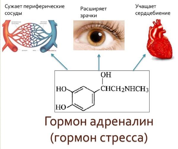 zhzhenie v oblasti serdtsa 8 - What pathologies can provoke a burning sensation in the heart
