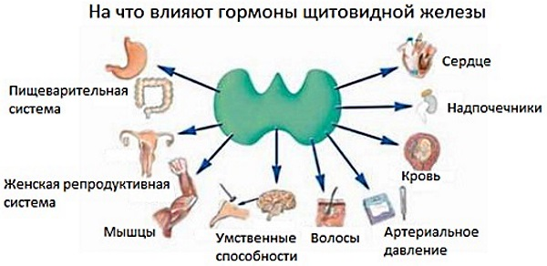 Эутирокс. Отзывы, побочные эффекты, передозировка. Как принимать таблетки для похудения, при беременности, гипотиреозе