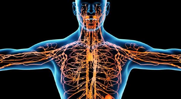 Лимфоузлы на шее: симптомы воспаления, расположение и анатомия