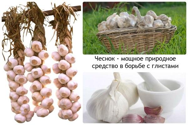 Народное средство от глистов у детей. Тыквенные семечки, полынь, чеснок, мед, лук, касторка