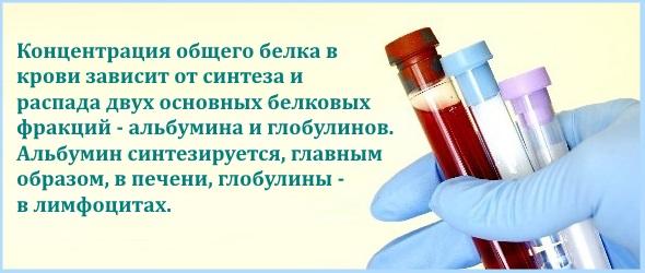 Общий белок в крови. Что это такое. Норма у женщин, мужчин по возрасту. Что значит пониженный, повышенный уровень