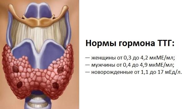 Анализ ТТГ. Что это такое, норма гормона по возрасту, что показывает, расшифровка. Подготовка, как сдавать