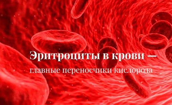 Эритроциты в крови повышены у взрослого. Причины, что значит, норма по возрасту. Таблица, обозначение