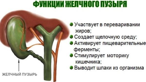 Изгиб желчного пузыря у ребенка. Симптомы, лечение, диета