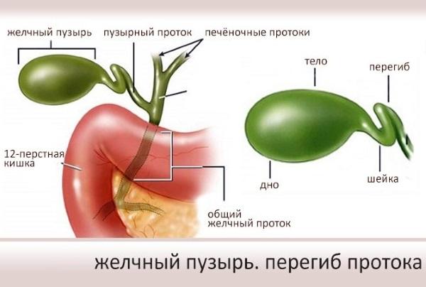 Перегиб желчного пузыря. Что это такое, симптомы и лечение, диета. Клинические рекомендации