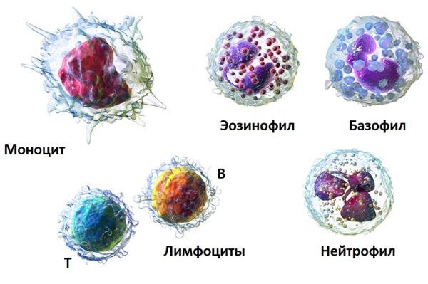 Показатели крови в норме у взрослых. Общего, биохимического, клинического, холестерин, билирубин, сахар. Расшифровка