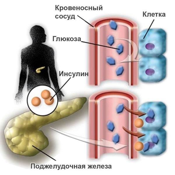 Понижение температуры тела у ребенка при орви thumbnail