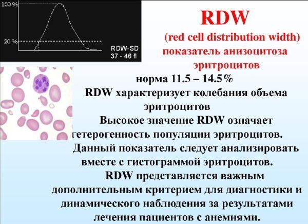 Rdw в анализе крови. Что это такое, норма, расшифровка