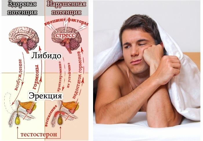 Ятрышник. Фото, лечебные свойства, применение в народной медицине и противопоказания
