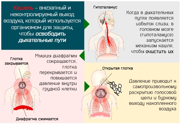 Асд 2 фракция при псориазе